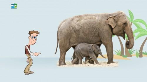 Man - elephant - small