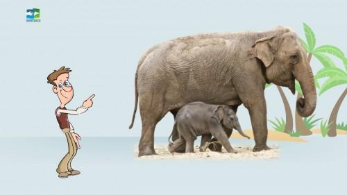 Man - elephant - big