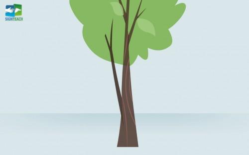 Tree - close